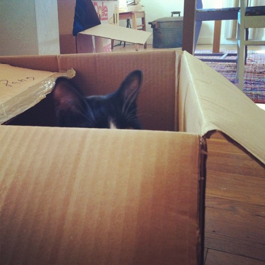 box ears